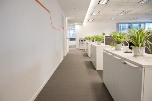 Office Aisle with Individual Plants for each work station